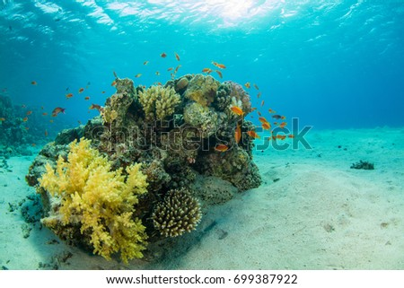 Beautiful coral reef with sealife. Underwater landscape photo with fish and marine life #699387922