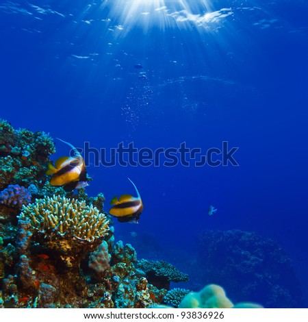 beautiful coral reef with sunrays through water surface and yellow fish