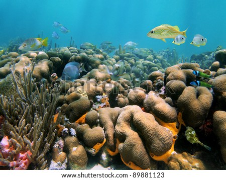 Beautiful coral reef with tropical fish in the Caribbean sea