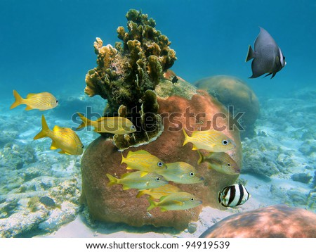 Beautiful corals with tropical fish in a reef of the Atlantic ocean, Bahamas