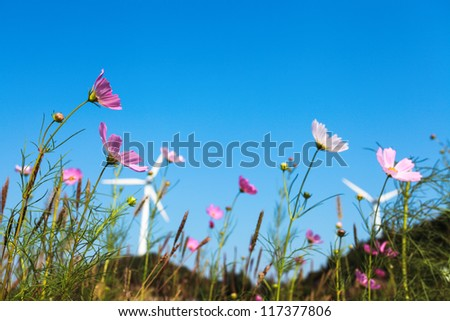 beautiful coreopsis flower on the front of wind turbines background