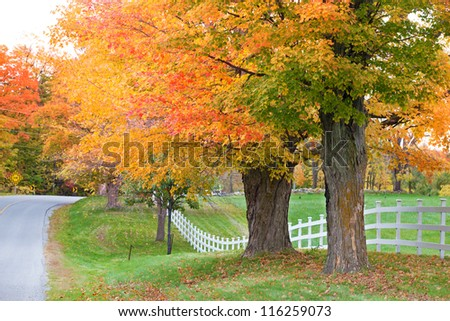 Beautiful country road in autumn foliage - Shutterstock ID 116259073