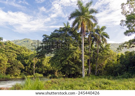 Beautiful countryside in a tropical country during summer time, exhuberant green vegetation and amazing blue clear sky