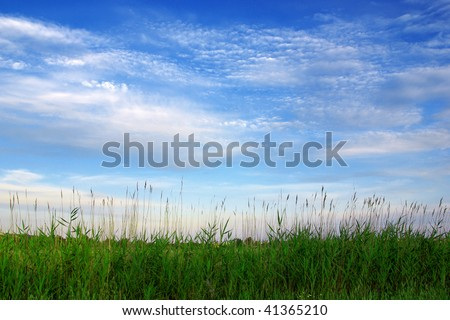 Beautiful countryside landscape with long spikes of cereals - stock photo