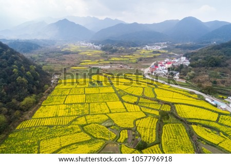 beautiful countryside of China is in spring, rape flowers are in full bloom