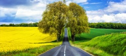 beautiful countryside of France. Blooming yellow fields and arch tree on the road. beauty in nature