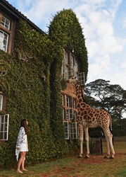 beautiful couple on a honeymoon in africa in a hotel giraffe manor breakfast with giraffes luxury holiday