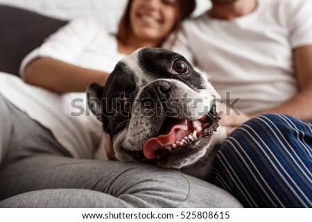 Beautiful couple resting on sofa with dog. Focus  pug.