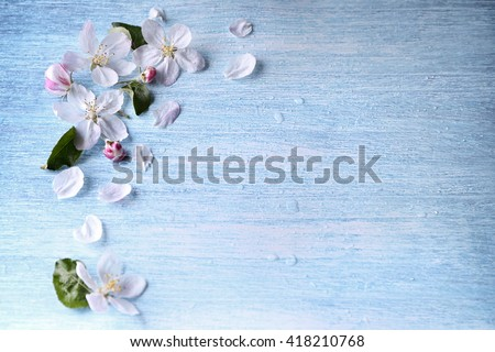 Shutterstock Beautiful crab apple tree blossoms against a blue background.