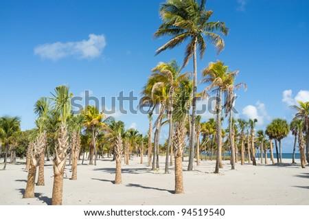 Beautiful Crandon Park Beach in Miami. Florida.