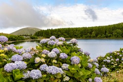 Beautiful crater lake - Lagoa da Lomba - with the typical island hortensia on Flores Island in the Azores. Flores is part of the Azores, an island group in the Atlantic belonging to Portugal.