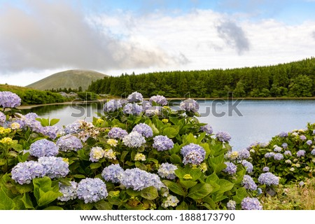 Beautiful crater lake - Lagoa da Lomba - with the typical island hortensia on Flores Island in the Azores. Flores is part of the Azores, an island group in the Atlantic belonging to Portugal. Photo stock ©