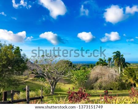Beautiful Cuban landscape with lush greenery. #1373151749