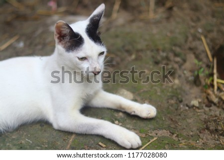 Beautiful Cute Cat #1177028080