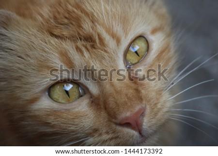 Beautiful cute cat cute cute #1444173392