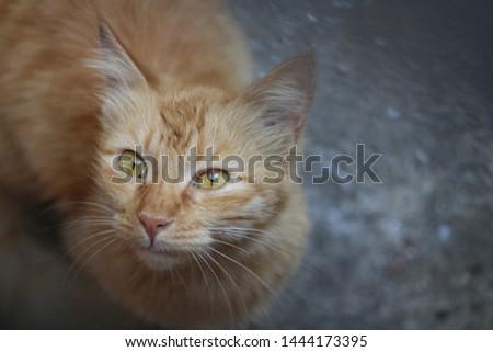 Beautiful cute cat cute cute #1444173395