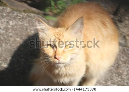 Beautiful cute cat cute cute #1444173398