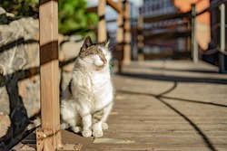 beautiful cute cat  taking sun bath at street of old town