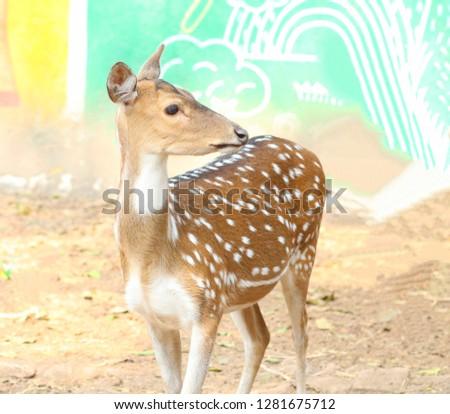 Beautiful cute deer picture