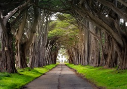 Beautiful Cypress Tunnel on the way to Point Reyes