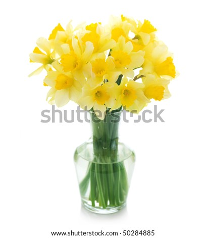 daffodils poem. wordsworth daffodils poem