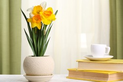 Beautiful daffodils in pot with books on fabric background