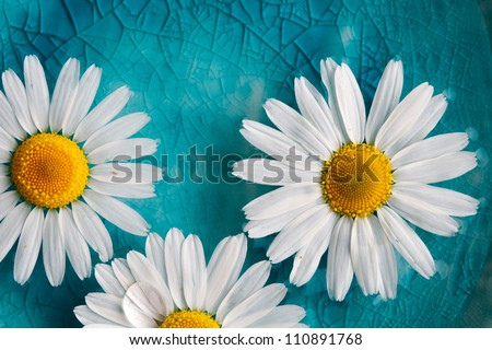 Stock Photo Beautiful daisies floating in bright turquoise water