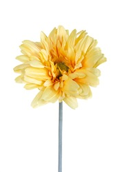 Beautiful daisy gerbera artificial flower isolated on white background