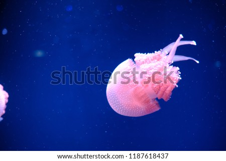 Beautiful Dancing Jellyfish  #1187618437