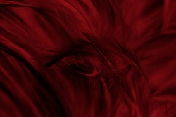 Beautiful dark black red maroon feather pattern texture background