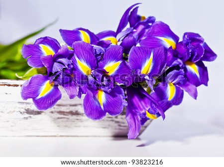 beautiful dark purple iris flower isolated on white background. Bouquet of flowers.