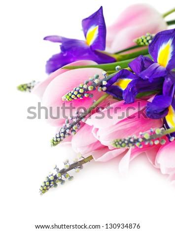 Beautiful dark purple iris flower, tulips and muscari isolated on white background