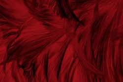 Beautiful dark red maroon feather pattern  texture background