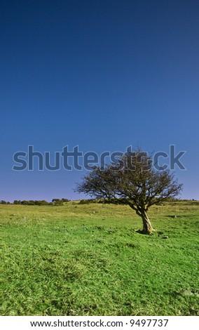 Beautiful Dartmoor Landscape