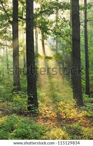 Beautiful dawn in autumnal forest