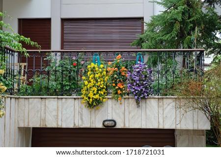 Beautiful decorative flowers on balcony Stok fotoğraf ©