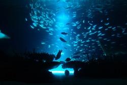 Beautiful deep sea and fish