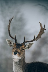 Beautiful deer in winter time.