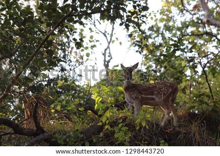 Beautiful deer pictures.