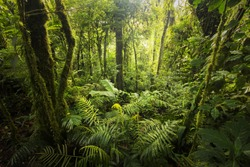 Beautiful, dense vegetation from the cloud-forests from Costa Rica.