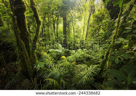 Beautiful, dense vegetation from the cloud-forests from Costa Rica. #244338682