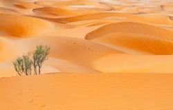 Beautiful Desert Dunes Ripples at Liwa Abu Dhabi UAE