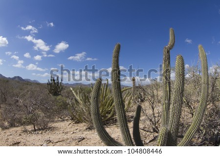 beautiful desert landscape of baja california sur, mexico
