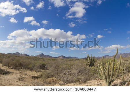 beautiful desert landscape of baja california sur, mexico - stock photo