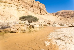 Beautiful desert spring oasis water pit tree stone cliffs landscape, Negev travel Israel tourism.