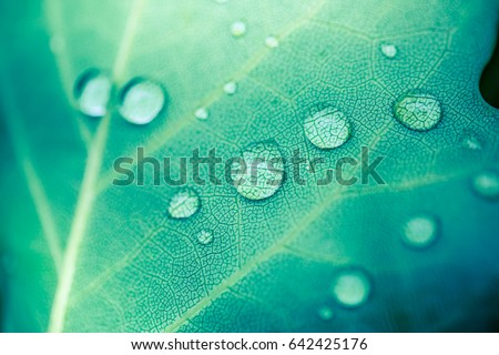 Beautiful details of nature. Morning dew drops on fresh green leaf