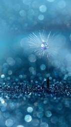 Beautiful dew drops on dandelion seed macro. Beautiful soft blue background. Water drops on parachutes dandelion. soft focus on water droplets. abstract background. Macro nature. Vertical