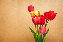 Beautiful different tulips on old paper background