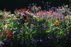Beautiful Display of a Variety of colorful Flowers in the perennial flowerbed in the garden.