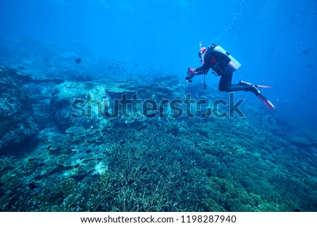 Beautiful diving underwater with Fishes and Corals at Losin south of Thailand 2018 #1198287940